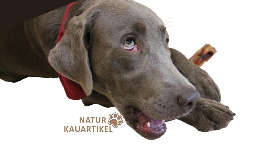 Kauartikel als wichtiger Bestandteil der Hundeernährung