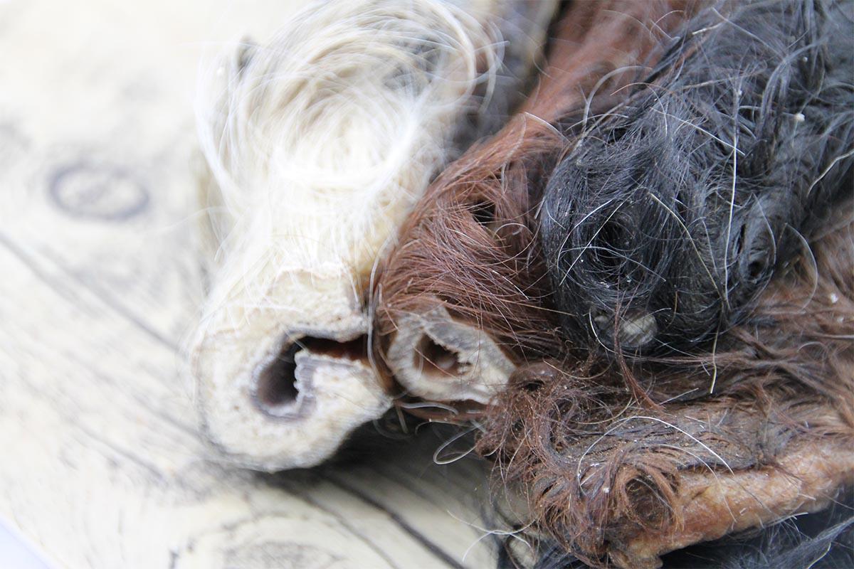 Rinderkopfhaut mit Fell - Darmreinigung & Hundeernährung